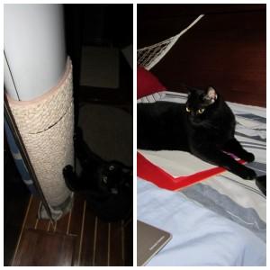 Ship Cat, Pepe Le Pew 2015_07_29