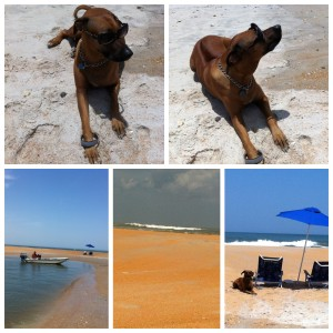 Secret agent, Nyah on Sandbar duty 2015_08_05