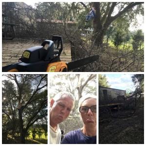 2015_10_27 Tree trimming 101
