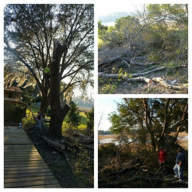 Tree finally down