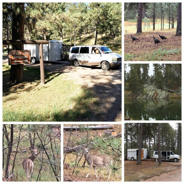 3-custer-sp-campgrounds-0c4f58ca7db54d55a8cc29fd83325522