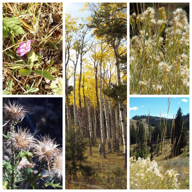 Wild flowers and fall folliage, Yellowstone National Park